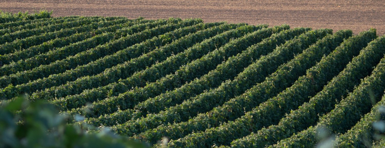 Champagne Christophe Crochet